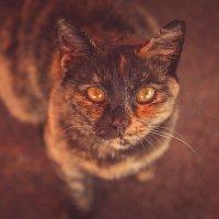 черепаховый окрас :: Тася Тыжфотографиня