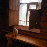 рыжий кот у окна :: Мила