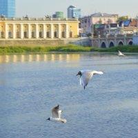 Три чайки на фоне филармонии и моста :: Александр Андрианов