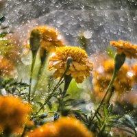 дождь :: Василий Либко