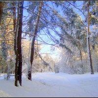 приглашение в голубой лес... :: Галина Флора