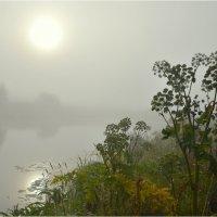 Туман (2) :: Николай Емелин