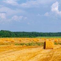 Сельский пейзаж. Август 2014. 03. :: Анатолий Клепешнёв