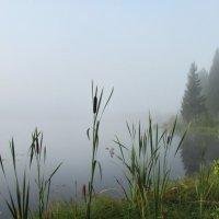 Туманный август :: Юрий Кузмицкас