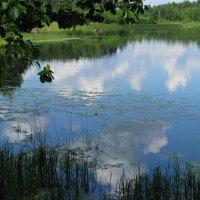 Лесное озеро :: Наталья