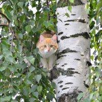 Помогите!!!!!!! :: Олег Петушков