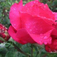 Свежесть летнего дождя... :: Тамара (st.tamara)
