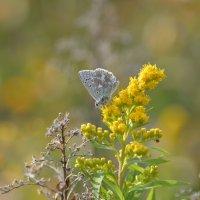 Бабочка :: Ольга Кунцман