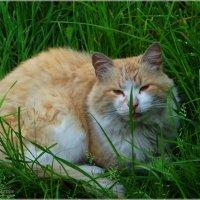 Спрятался в траве. :: Антонина Гугаева