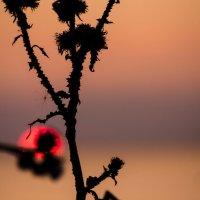 Былинка и закат :: Lena Li