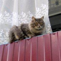 На балконной прогулке . :: Мила Бовкун