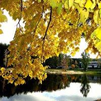 Пруд сквозь желтую листву :: Лидия (naum.lidiya)