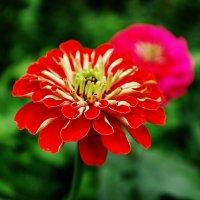 Цветы :: Александр Власенко