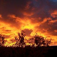 Пылающий закат. :: Виктор Елисеев