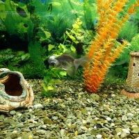 В подводном царстве :: Marina Timoveewa