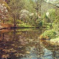 Японский сад :: Юлия Лемехова