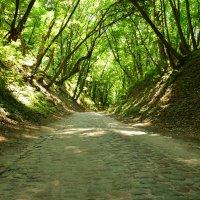 дорога в лесу :: Константин
