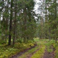 В лес. :: zoja