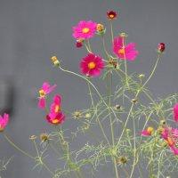 ...цветы... :: NюRа;-) Ковылина