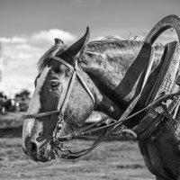 Лошадь :: Артём Завьялов