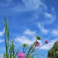 цветы в облаках :: Александр С.
