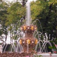 Летний сад. :: Дмитрий Рожков