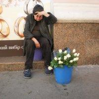 Как хороши, как свежи были розы... :: Наталья Тимошенко