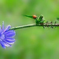 Торжествует летняя природа :: Лидия Цапко