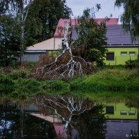 После урагана :: Игорь Вишняков