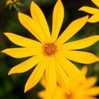 Цветок :: Павел К