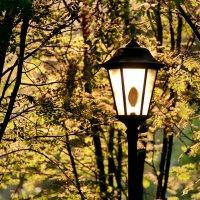 Дневной светильник :: Юрий Савинский