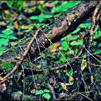 лесные тайны :: Дмитрий Анцыферов