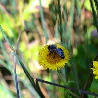 пчелка :: Валентина Кузьменко