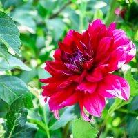 Аленький цветочек :: Кристина Шестакова