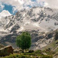 Северная Осетия.... :: Оксана Онохова