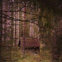 Домик в лесу :: Валерий Стогов