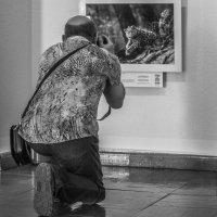 """Преклоню колени...:) на выставке """"Золотая черепаха"""" :: Juli@"""