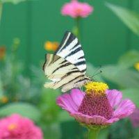 яркие краски природы :: Ольга Титова - Иншакова