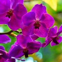 Орхидеи :: Igor Khmelev