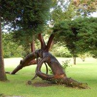 Удивительное дерево :: Natalia Harries
