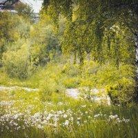 Весна в лесу :: Ирина Фомина