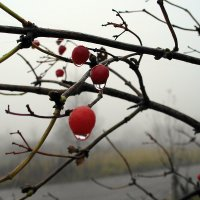 Поздняя осень :: Карпухин Сергей