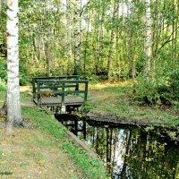 Мостик в лесу :: Олег Попков
