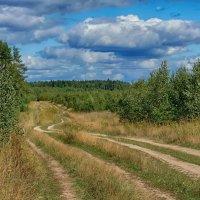 Дорога полевая..но двусторонняя... :: марк