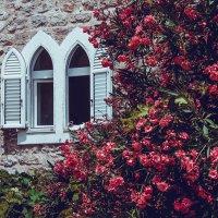 Почувствуй запах цветов. :: Maria Bushko