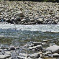 Горная река :: Вика Азарова