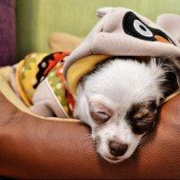 спящий пес :: Геннадий Клевцов