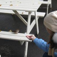 Осень настала, холодно стало, кушать хотят воробьи... :: Андрей Горячев