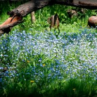 На лесной поляне :: Геннадий Храмцов