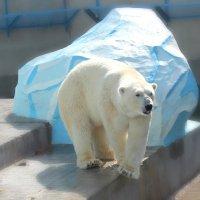 Новосибирский зоопарк! :: Оксана Яремчук